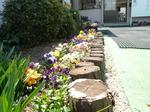 春らしい花壇